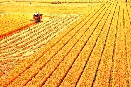 The international competitiveness of China's agricultural products